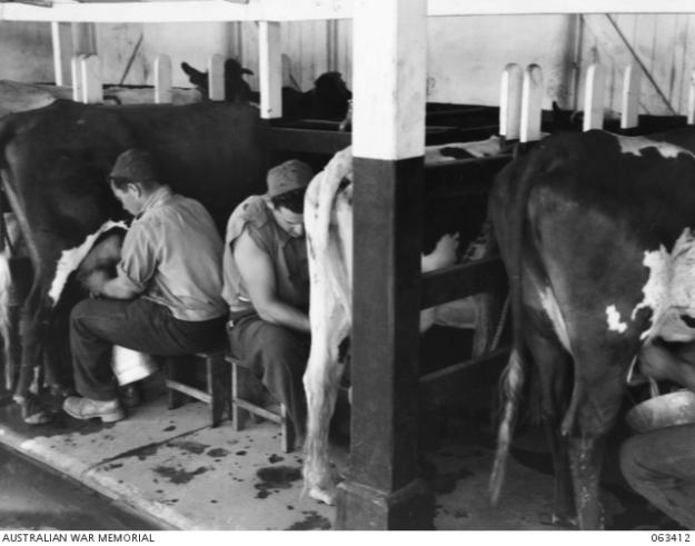 hay-milking